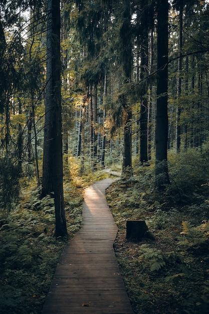 Concept van natuur, reis, reizen, trekking en zomer. verticaal schot van weg in park dat tot bebost gebied leidt. buiten mening van houten promenade langs hoge pijnbomen in ochtendbos Gratis Foto