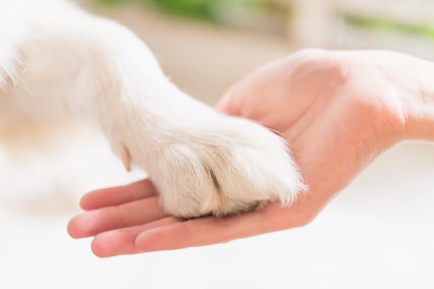 Contact tussen hondenpoot en menselijke hand, gebaar van genegenheid Premium Foto