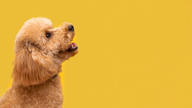 Copy-space schattige hond Premium Foto