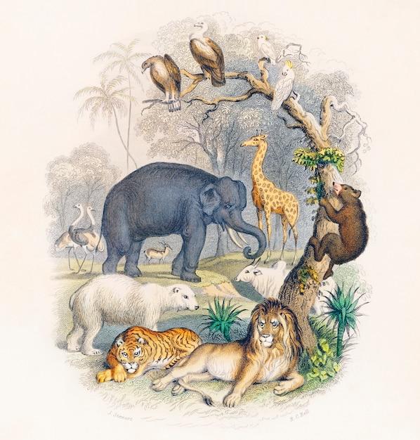 Cover van een geschiedenis van de aarde en geanimeerde natuur (1820) door oliver goldsmith Gratis Foto