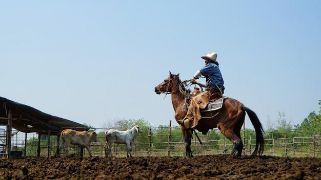 Cowboy rijpaard en koe in de landbouwgrond Premium Foto