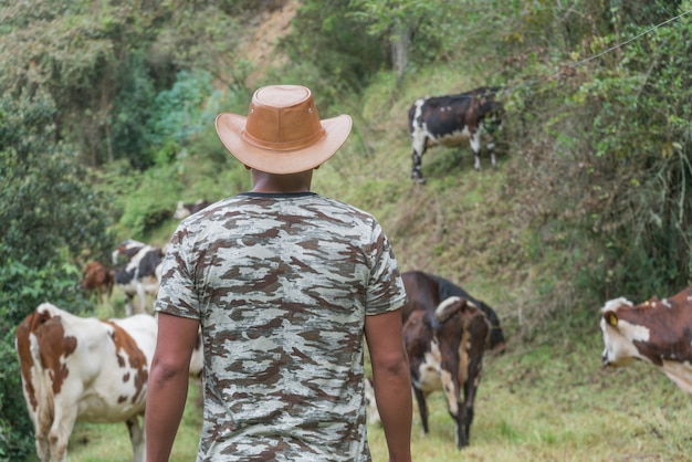 Cowman die zijn koeien in openlucht behandelt Premium Foto