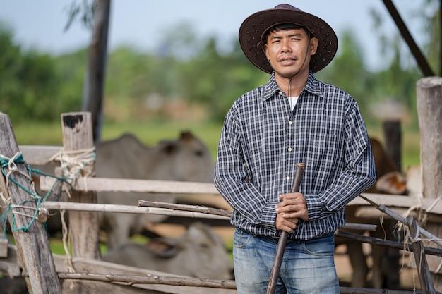 Cowman in stal en zijn koeien Premium Foto