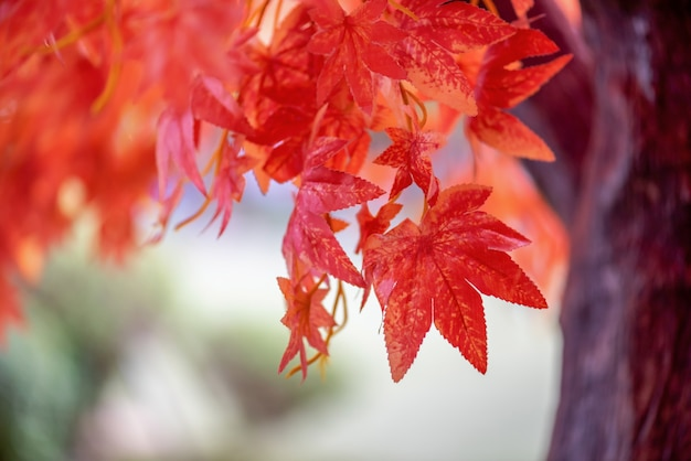 Dag esdoorn bladeren achtergrond Premium Foto