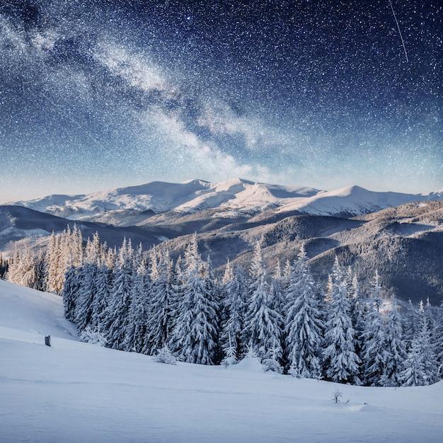 Dairy star trek in het winterbos. dramatische en pittoreske scène. karpaten, oekraïne, europa. Premium Foto