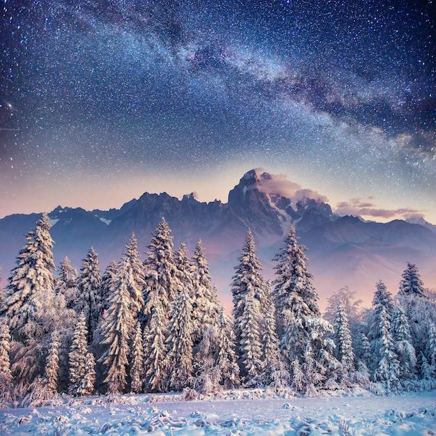 Dairy star trek in het winterbos. karpaten, oekraïne Premium Foto