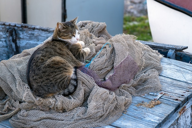 Dakloze kat op het visnet op de boot Premium Foto