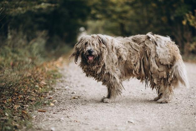 Dakloze oude hond die in park loopt Gratis Foto