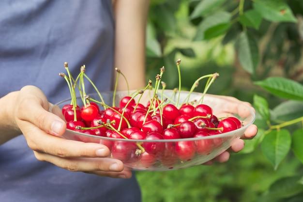 Dames handen met kom met rijpe verse rode kersen Premium Foto
