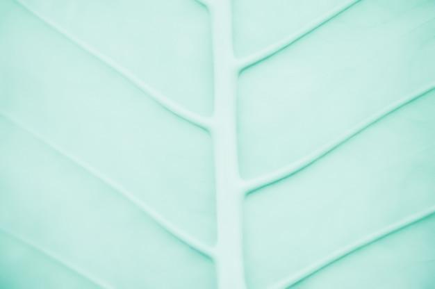 De abstracte groene achtergrond van de bladtextuur voor ontwerp Premium Foto