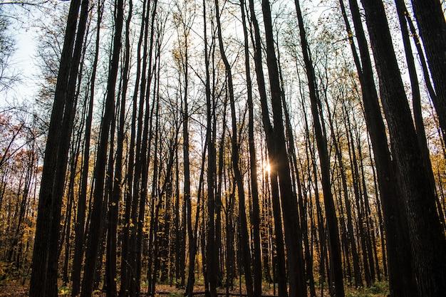 De achtergrond bosherfsttextuur valt de herfstherfst halloween Premium Foto