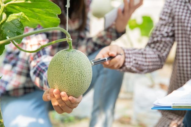 De agronoom onderzoekt de groeiende meloenzaailingen op de boerderij, boeren en onderzoekers in de analyse van de plant. Gratis Foto