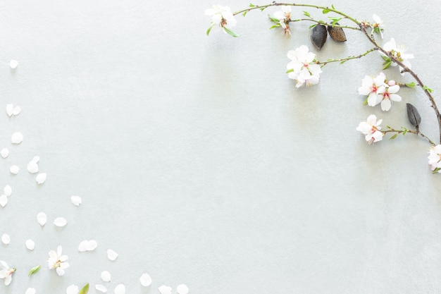 De amandelboom bloeit samenstelling op grijze achtergrond Premium Foto