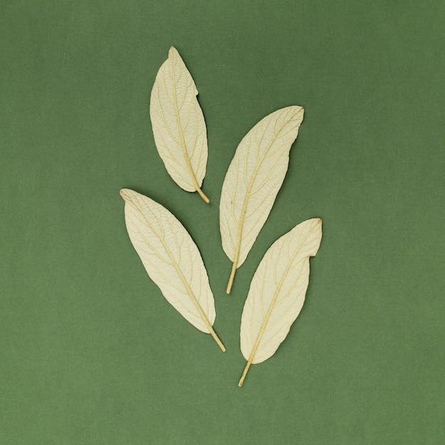 De baaibladeren van de close-up op groene achtergrond Gratis Foto