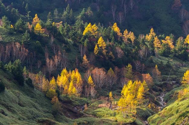 De bergmening van de herfst op mt.shigakogen in prefectuur nagano, japan. Premium Foto