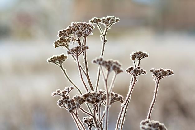 De bevroren installaties in vroege ochtend sluiten omhoog in de winter Premium Foto