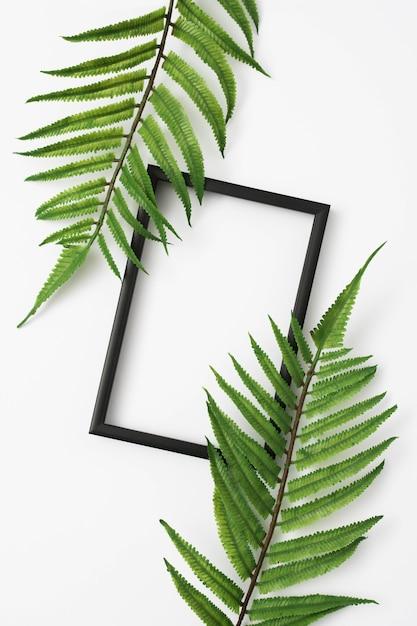 De bladeren van varenbladeren met houten fotokadergrens op witte oppervlakte Gratis Foto