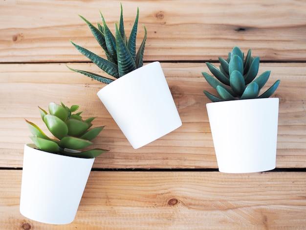 De bomen verfraaien huis met cactus in witte die pot op houten lijst wordt geplaatst. Premium Foto
