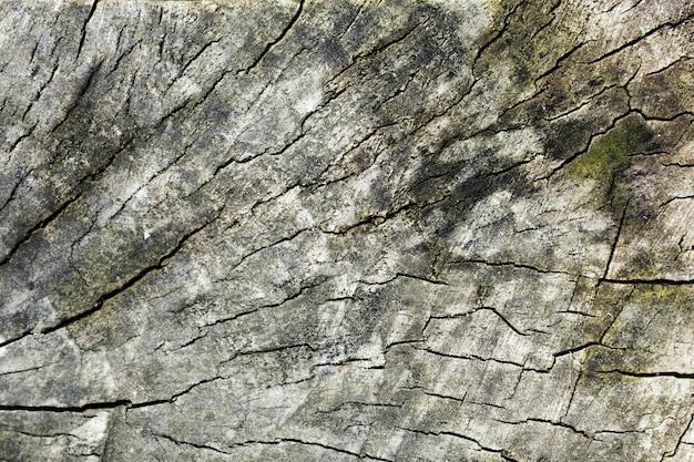 De boomstam houten achtergrond van de boom en groene vlekken Gratis Foto
