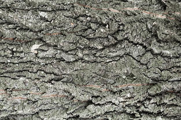 De boomstam houten achtergrond van de boom in grijze schaduwen Gratis Foto