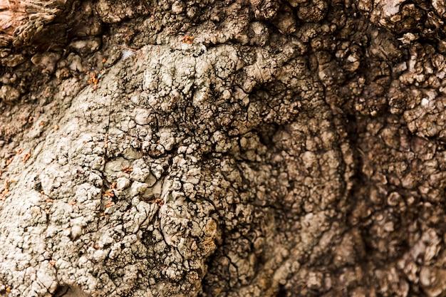 De boomstamtextuur van de boom dicht omhoog Gratis Foto