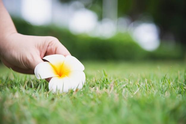 De dame plukt plumeriabloem van groene grasgrond met de hand - mensen met mooi aardconcept Gratis Foto