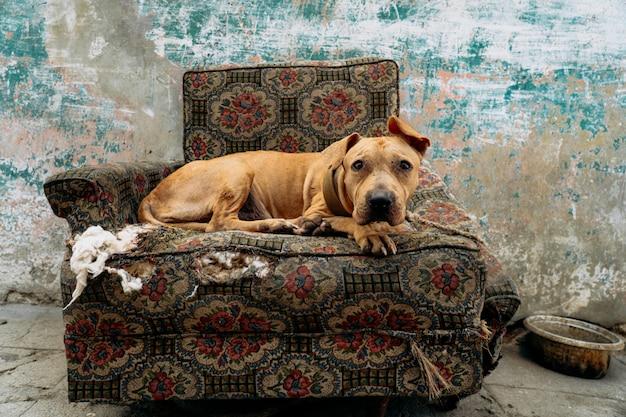 De droevige hond zit op de fauteuil Gratis Foto