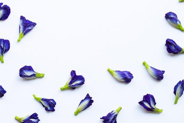 De erwtenbloem van de vlinder op wit Premium Foto