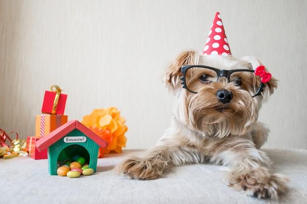 De grappige leuke van yorkshire terrier (yorkie) hond in glazen op feestelijke achtergrond Premium Foto