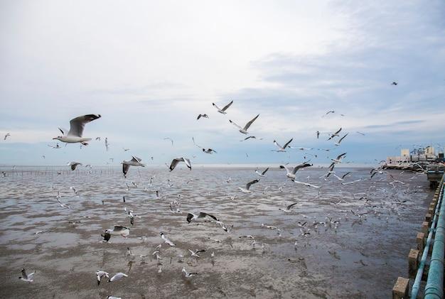 De groep zeemeeuwvogel vliegt. Premium Foto