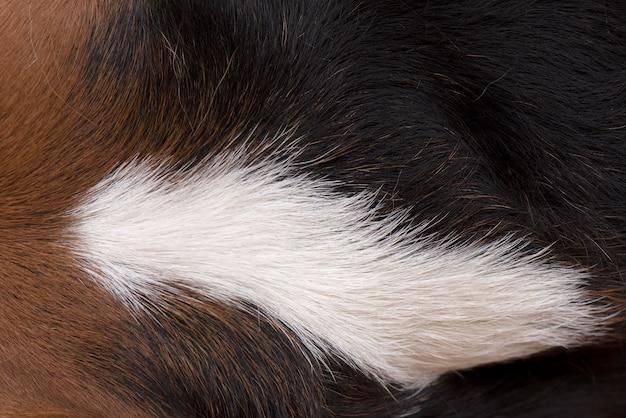 De haartjes van de hond zijn bruin, wit en zwart Premium Foto