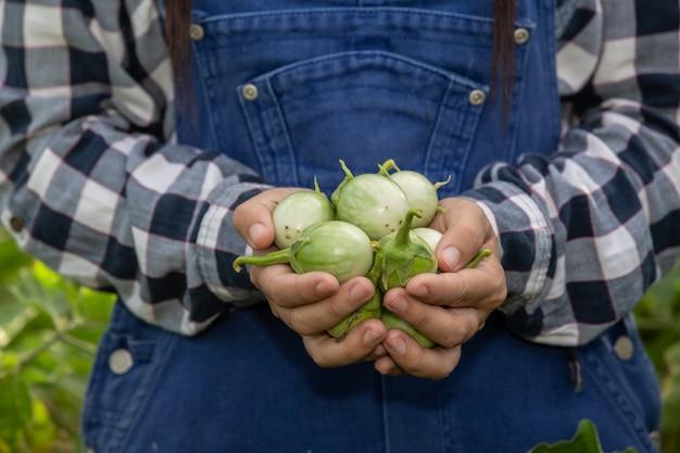 De hand van de boer, de vrouw met de groente in haar hand en die van een rijstveld. Gratis Foto