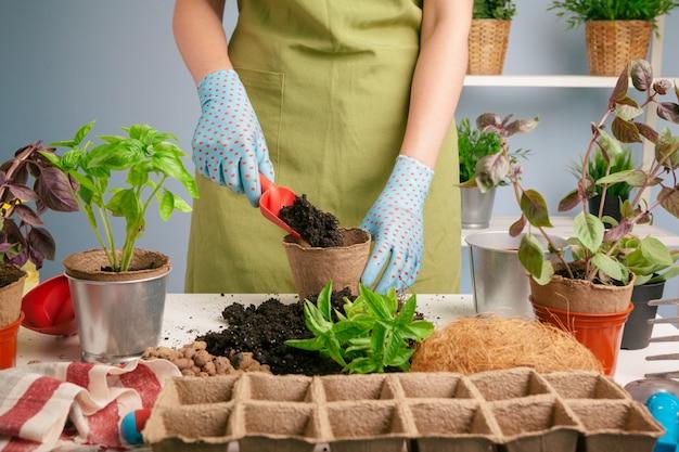 De handen van de vrouw verplanten plant a in een nieuwe pot Premium Foto