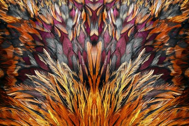 De heldere bruine veren van haan sluiten omhoog. Premium Foto
