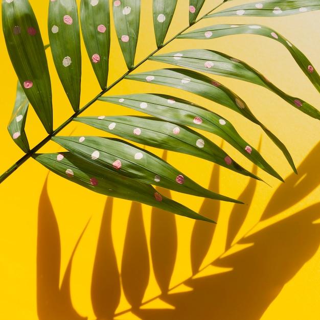De helft tropische varenbladeren en schaduwen Gratis Foto