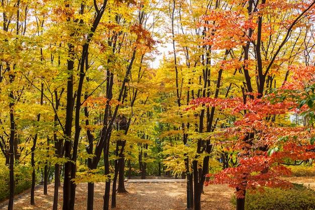 De herfst van namsan-toren in seoel, zuid-korea Premium Foto