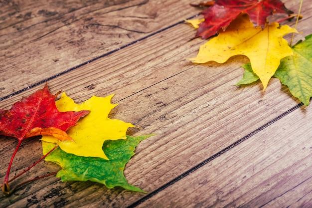 De herfstachtergrond met de kleurrijke bladeren van de dalingsesdoorn op rustieke houten lijst Premium Foto
