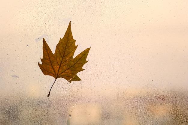 De herfstachtergrond met esdoornblad op een venster met regendruppel Premium Foto
