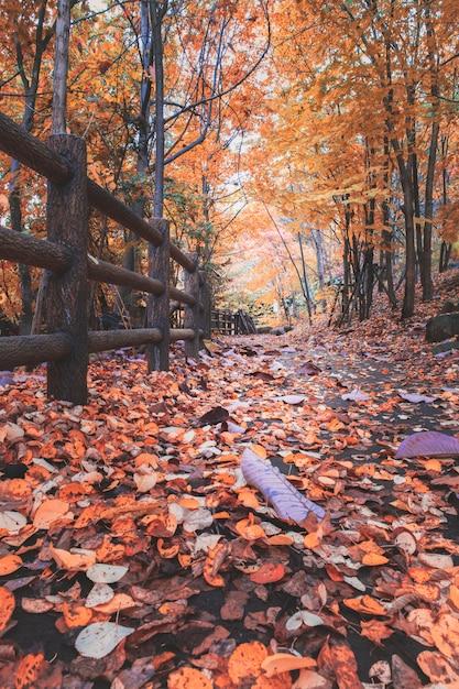 De herfstbladeren op sleep in het bos in jozankei Premium Foto