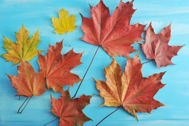 De herfstesdoorn gaat rood en geel weg op een blauwe houten oppervlakte Premium Foto