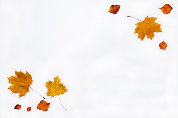 De herfstgrens van herfstbladeren wordt gemaakt op witte achtergrond die. plat lag, bovenaanzicht. kopieer ruimte voor seizoensgebonden promoties en kortingen. Premium Foto