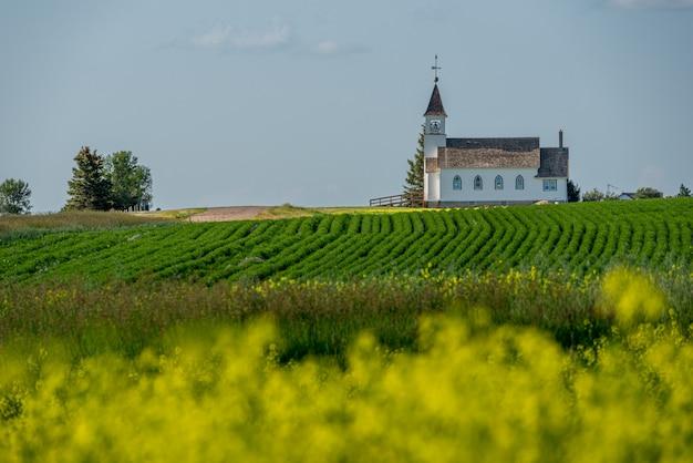 De historische zion lutheran church en het kerkhof in de buurt van kyle, saskatchewan met een canolaveld en linzenveld op de voorgrond Premium Foto