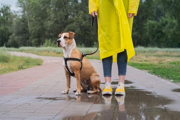 De hond wandelen in gele regenjas op regenachtige dag. vrouwelijke persoon en staffordshire terriër hond aangelijnd staan op de stoep met plassen in stadspark bij slecht weer Premium Foto