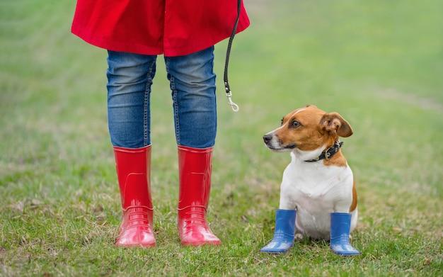 De hondzitting van jack russell naast een meisje in jeans en rode regenlaarzen in de lentepark. Premium Foto