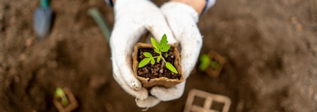 De hoogste mening van tuinman houdt kleine zaailing in een document pot Premium Foto