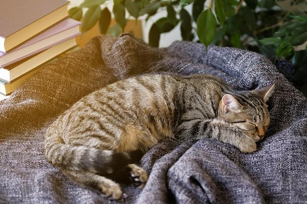 De huiskat ligt en slaapt op een gebreide deken, knus opgerold. getinte foto. Premium Foto