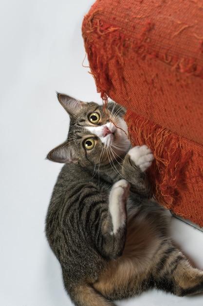 De kat krabt thuis op de bank. Premium Foto