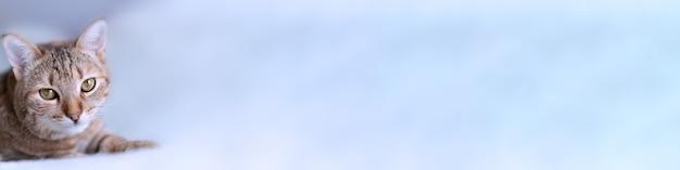 De kat ligt op een donzige blauwe deken. Premium Foto