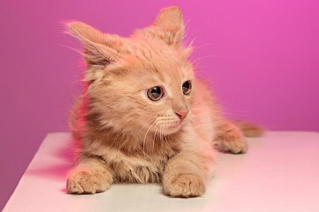 De kat op roze ruimte Gratis Foto