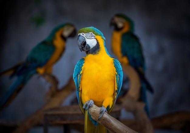 De kern van de papegaai op de takken in de dierentuin. Premium Foto